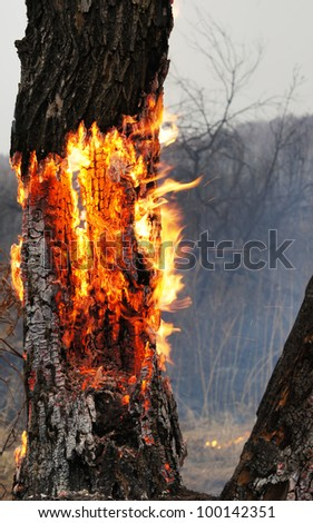 Burning tree in the forest - stock photo