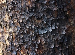 burnt after a fire tree trunk close-up