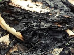burnt book paper pile on extinct bonfire. fragment of the ashes pile