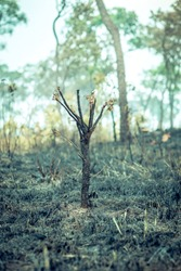 Burnt Down Amazon Tropical Rain Forest