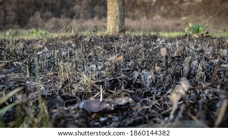 Burnt ground, charred grass and leaves after a forest fire. Aftermath of natural disasters, consequences of arson and stubble burning. Burned soil, close up, ground view. Stock photo ©