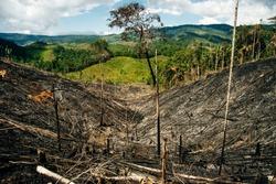 burnt rainforest in colombia. Fallen trees
