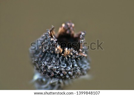 burst seed box is like Black flower of death (named Devil's Claw). Hell flower, limb of Satan. Window into world of ultra macro