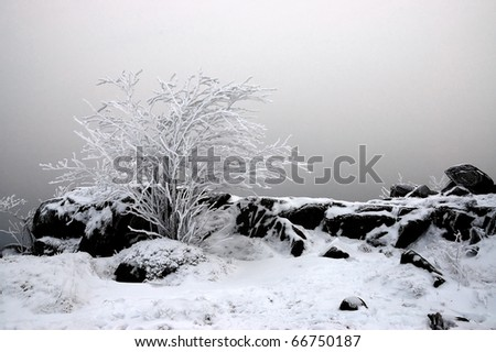 Bush and grass and rock covered with snow - stock photo