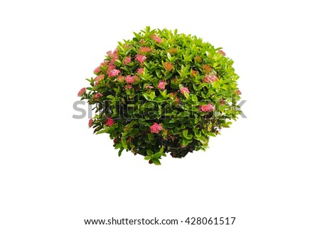 bush and pink flower isolated background for retouch #428061517