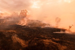 Bush fire, Burned black land on hill in Australia