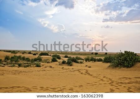 Bush growing on arid landscape, Jaisalmer, Rajasthan, India