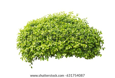 Bush isolated on white background #631754087