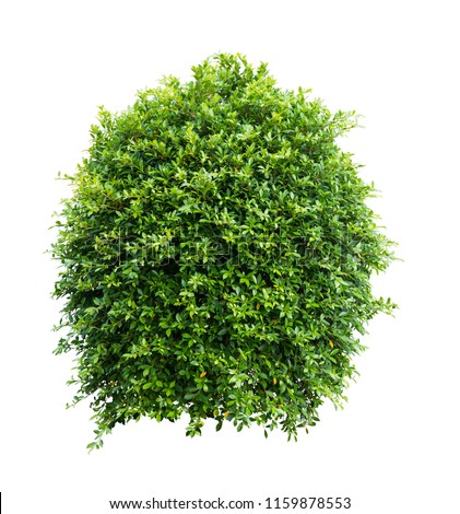 Bush isolated on white background,Objects with Clipping Paths #1159878553