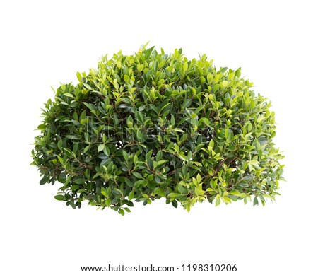 Bush isolated on white background,Objects with Clipping Paths #1198310206