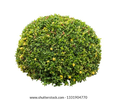 Bush isolated on white background,Objects with Clipping Paths #1331904770