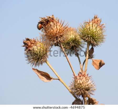Bush of a burdock as a symbol of stickiness and harm - Shutterstock ID 4694875