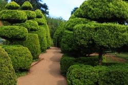 bush plant in a park, banasura sagar, Wayanad, Kerala