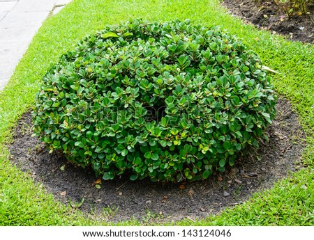 bush trim a sphere
