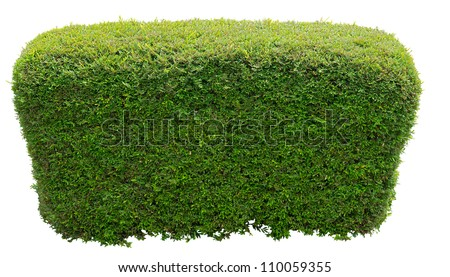 Bush trimmed into round shape