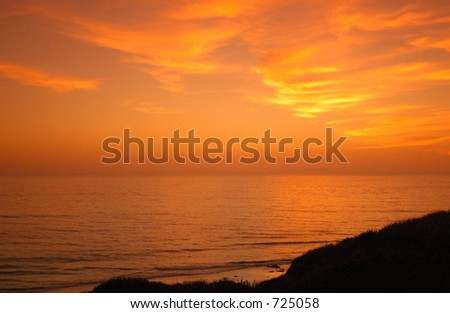 Bushes at Sunset