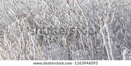 Bushes covered with frozen. Beautiful winter texture. #1263946093