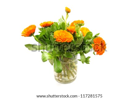 Bushes of orange Calendula isolated on white