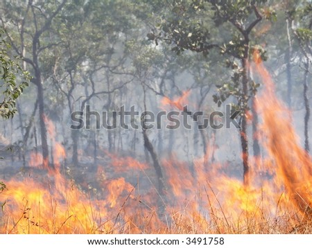 Bushfire - focus on burning grass in foreground - stock photo