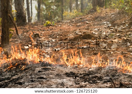Bushfire in forest ,Thailand - stock photo