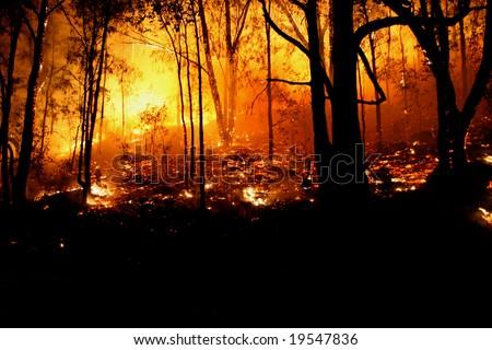 Bushfire/Wildfire closeup at night