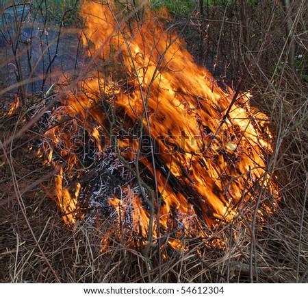 Bushfire/Wildfire closeup in summer
