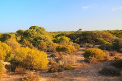 Bushland in remote part of Australia