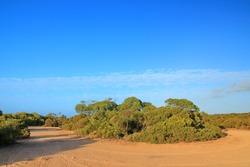 Bushland in remote part of Australia