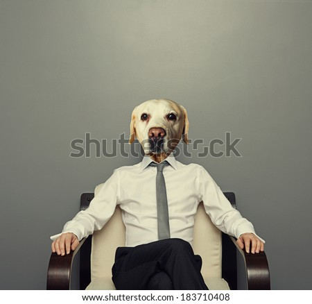 business dog sitting on the chair over grey background