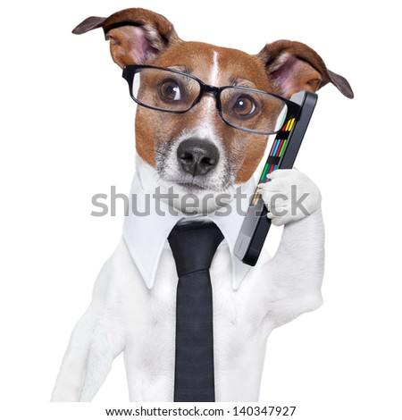business dog with a smartphone and glasses