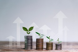 Business investment growth concept. tree piles of coins with small trees.