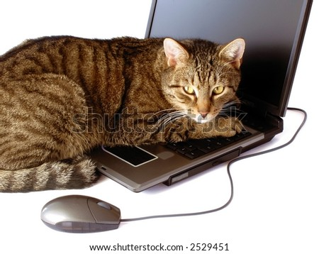 Business-kitty - hacker - portrait of cat with laptop - isolated on white background