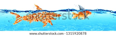 Business - Leadership And Teamwork Concept - Goldfish With Fin Shark And Followers Group Of Small Fishes  #1315920878