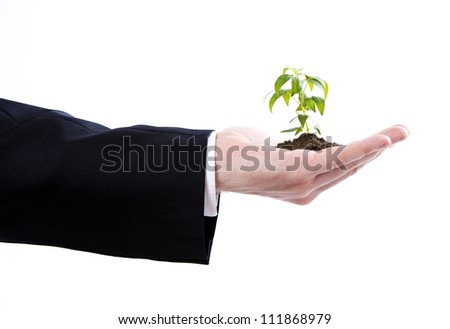 Business man holding a small plant