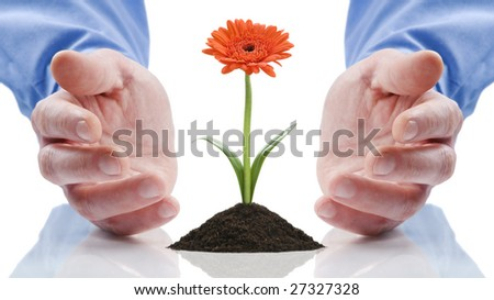 business men holding a flower between hands on white