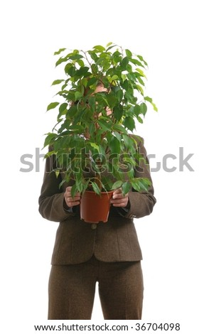 Business woman in suit carrying and hiding behind benjamin ficus plant - isolated on white - stock photo