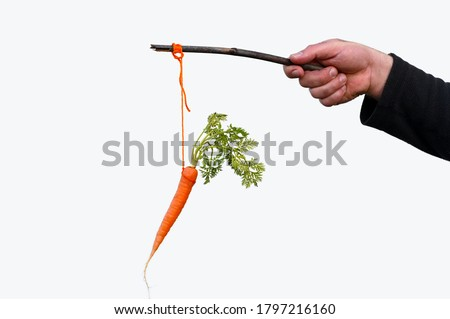Businessman hand holding Carrot on a stick isolated on white background. Carrot and stick reward and punishment concept.