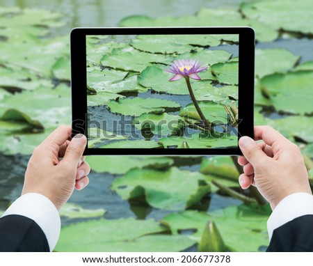 Businessman hands tablet taking pictures Pink lotus flower on the water in garden #206677378