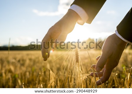 businessman holding his hands around an ear of wheat in an agricultural field backlit by the business life concepts