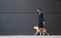 Businessman walking dog at street. Best friends walking. Handsome businessman hipster walking dog.