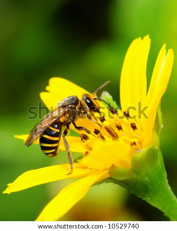 Busy bee collecting nectar - stock photo