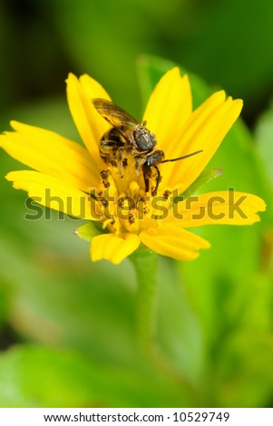 Busy bee collecting nectar