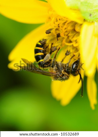 busy bee collecting nectar upside down