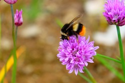 Busy Bee is buzzing around.