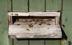 Busy bees in movement near a wooden bee house in Hörbranz, Austria. Partially blurry. Busy hectic life.