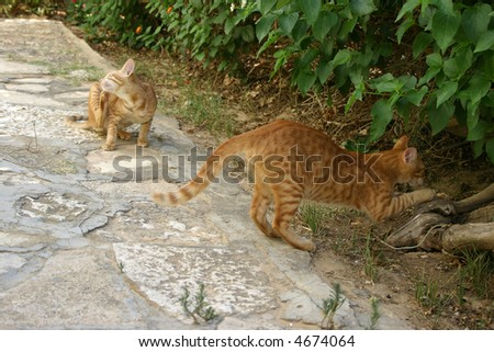 busy couple of red cats outside