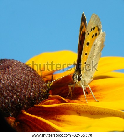 Buterfly on a flower - stock photo
