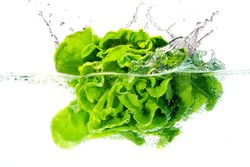 butter head lettuce falls under water with a splash. isolated on white background