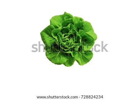 Butter head Lettuce plant for salad, hydroponic vegetable leaves, isolated on white background #728824234