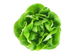 Butter head lettuce vegetable for salad on white back ground